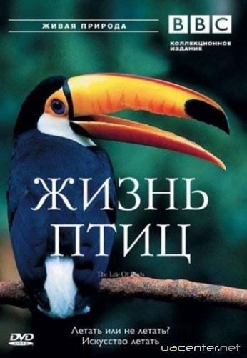 BBC: Життя птахів / The Life of Birds (1998) DVDRip