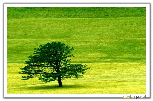 wallpapers natura mix 536